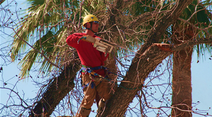 Certified Arborist and Owner Todd Hansen Removing a Large Dead Tree
