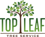 Expert Arizona Tree Trimming and Tree Removal by Certified Arborist Todd Hansen